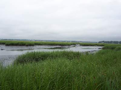 Charles Wheeler Wildlife Management Area, Milford